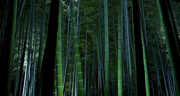 京都、高台寺の竹林ライトアップ